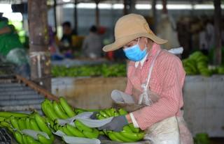 Tập trung tái cơ cấu nông nghiệp
