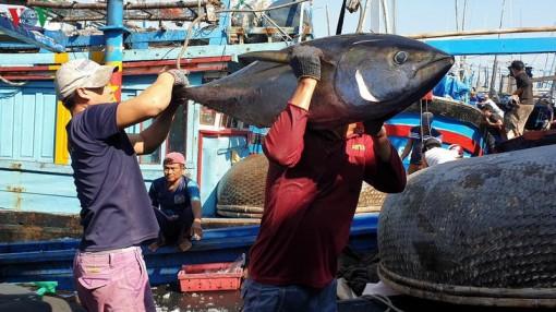 Xuất khẩu hải sản tăng khoảng 10% trong năm 2019