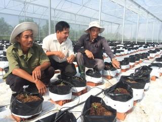 Tiếp tục nâng cao vai trò các cấp Hội Nông dân trong năm 2020