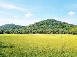 Diện tích gieo trồng của huyện Tri Tôn vượt kế hoạch