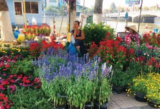 Đa dạng thị trường hoa Tết