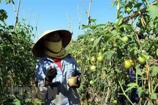 Luật Trồng trọt có hiệu lực, gắn sản xuất với chế biến nông sản