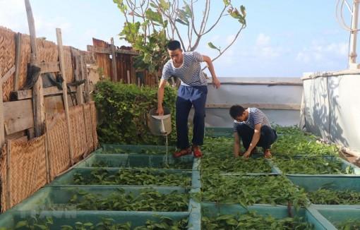 Sức Xuân nơi đầu sóng: Ươm những 'mầm xanh' trên đảo
