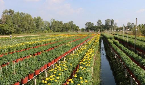 Hơn 15.000 chậu hoa kiểng sẵn sàng phục vụ Tết