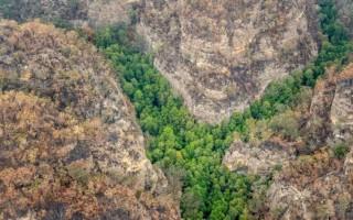 Australia cứu loài cây cổ tuổi đời hơn 200 triệu năm khỏi cháy rừng