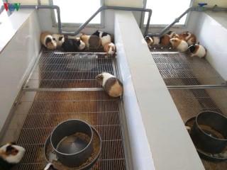 Năm Tý nói chuyện nuôi chuột cứu người
