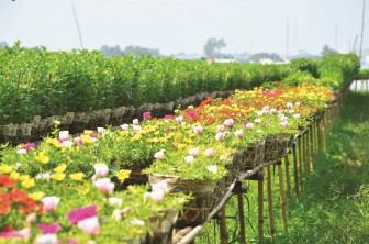 Đặc sắc làng hoa Tết
