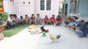 Bắt giữ 21 đối tượng đá gà ăn tiền