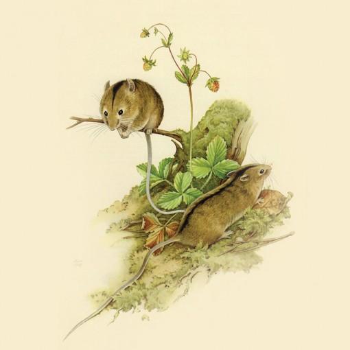 Vì sao chuột đứng đầu 12 con giáp