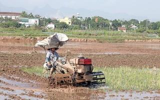 Chuẩn bị sản xuất lúa vụ đông xuân