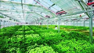 Doanh nghiệp sẽ là hạt nhân tiếp tục dẫn dắt nông nghiệp