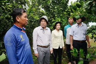 Châu Thành: Khuyến khích nông dân phát triển kinh tế trang trại