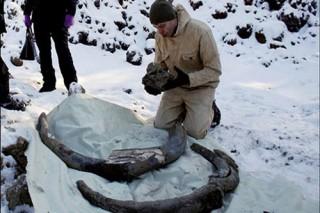Tình cờ phát hiện ngà voi ma mút khổng lồ 10.000 năm tuổi
