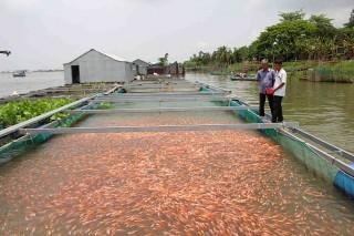 Phát triển thêm hơn 900ha nuôi thủy sản