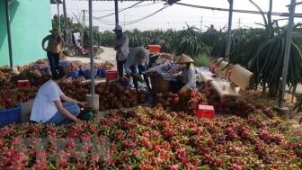 Nông nghiệp xây kịch bản tiêu thụ nông sản ứng phó dịch virus corona
