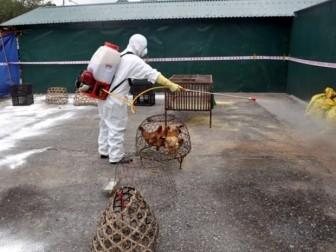 Công điện khẩn về triển khai phòng chống dịch cúm gia cầm