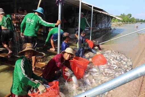Ngành hàng cá tra với nhiều kỳ vọng trong năm 2020