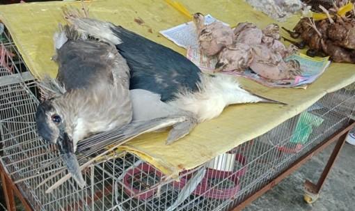 Kiểm tra, xử nghiêm nạn buôn bán động vật hoang dã để phòng dịch nCoV