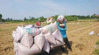 Nghiên cứu giải pháp thúc đẩy xuất khẩu gạo