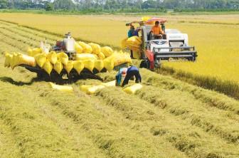 Virus Corona ảnh hưởng đến thị trường nông sản