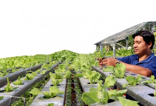 Nông dân tâm huyết với trồng trọt hữu cơ