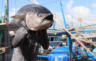 Hợp tác quốc tế, tạo thương hiệu cho cá ngừ Việt Nam