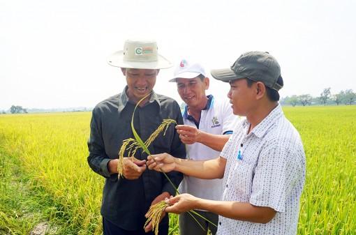 Phú Tân phát huy thế mạnh nông nghiệp
