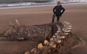 Bí ẩn bộ xương khổng lồ trên bờ biển, bị đồn là 'quái vật hồ Loch Ness'