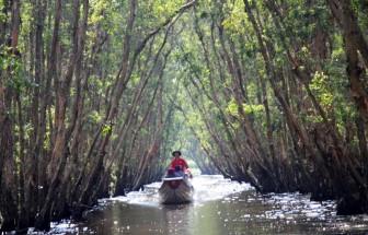 Bảo tồn và phát triển bền vững các vùng đất ngập nước, rừng tràm