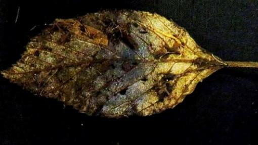 Phát hiện lá cây 6.000 năm tuổi gần như nguyên vẹn tại Anh