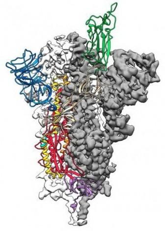 Đột phá trong vẽ bản đồ phân tử dịch viêm đường hô hấp cấp COVID-19