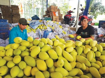 Hỗ trợ nông dân tiêu thụ nông sản