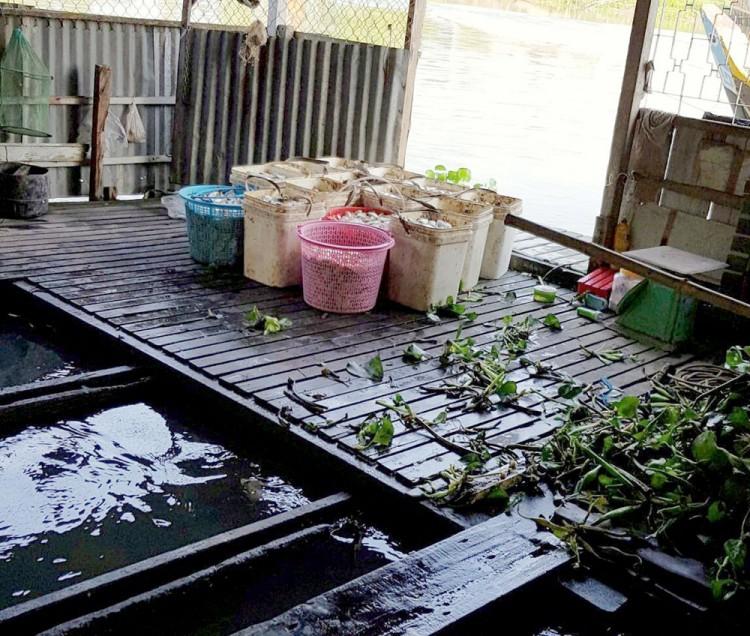 Vận động di dời các bè nuôi cá trên khu vực sông Cái Vừng