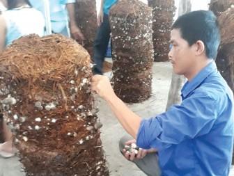 Nông dân liên kết phát triển nghề trồng nấm