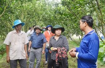 HĐND huyện Châu Thành: Khảo sát các mô hình chuyển đổi cơ cấu cây trồng