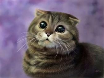 """Những loài mèo """"đẹp lạ"""" trên thế giới"""