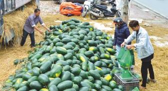 Liên đoàn Lao động tỉnh phát động các cấp Công đoàn tiêu thụ nông sản giúp nông dân