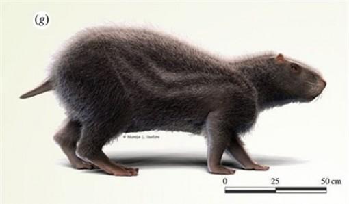 Phát hiện chuột khổng lồ to bằng người ở Amazon
