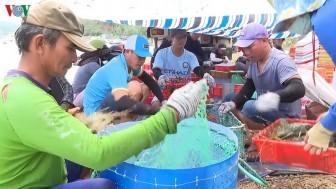 Phú Yên quy hoạch vùng nuôi thủy sản bền vững