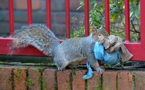 Sóc xây tổ bằng túi nilon