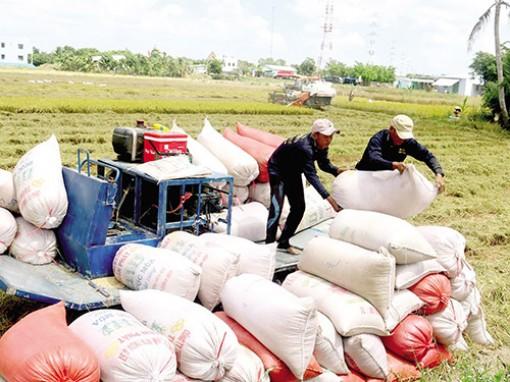 """Xuất khẩu gạo """"lập đỉnh"""" giữa cạnh tranh gay gắt"""