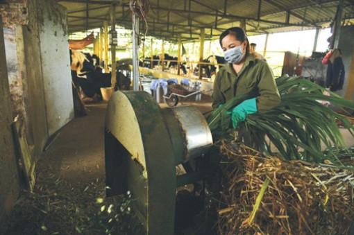 Hoa Kỳ giúp nông dân ứng dụng phần mềm quản lý thức ăn chăn nuôi