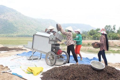 Sản xuất thích ứng với khô hạn