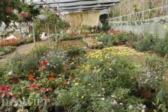Cho hoa ở trong nhà kính, lãi hơn 200 triệu đồng mỗi năm