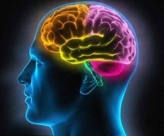 Vì sao não bộ của con người khó thông minh hơn nữa?