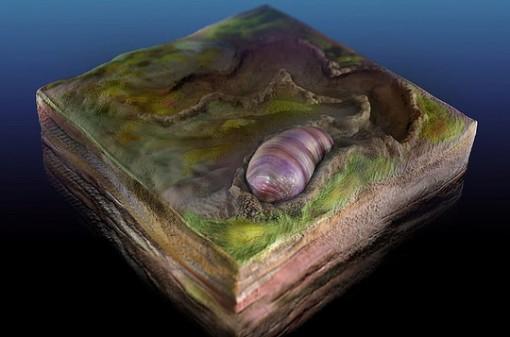 """Sốc với tổ tiên 555 triệu tuổi của loài người bị """"niêm phong"""" trong đá"""