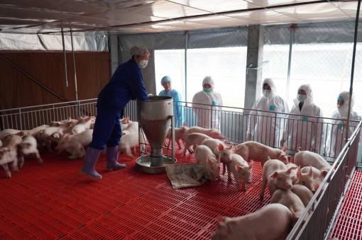 Bình ổn giá thịt lợn: Đưa giá lợn xuống 60.000 đồng/kg vào tháng 9