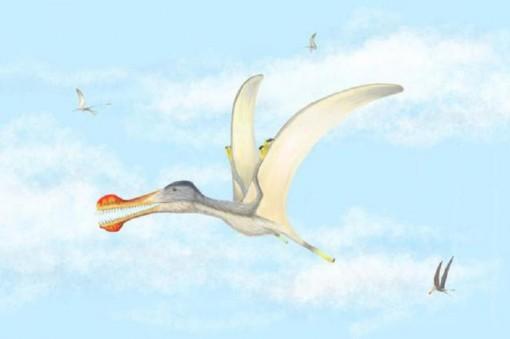 Phát hiện 3 loài bò sát biết bay ở Sahara