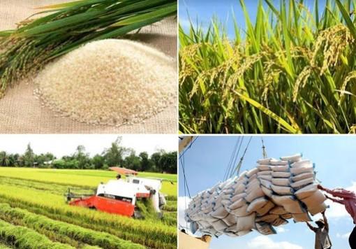 Thủ tướng: Bảo đảm lương thực dư dả cho 100 triệu dân