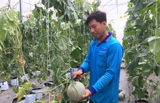 Phát triển các mô hình nông nghiệp ứng dụng công nghệ cao